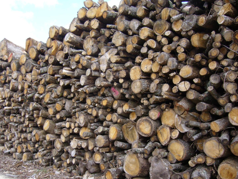 Stère De Bois Ancien > 2 m st u00e8re CH u00caNE (Livraison Inclus)